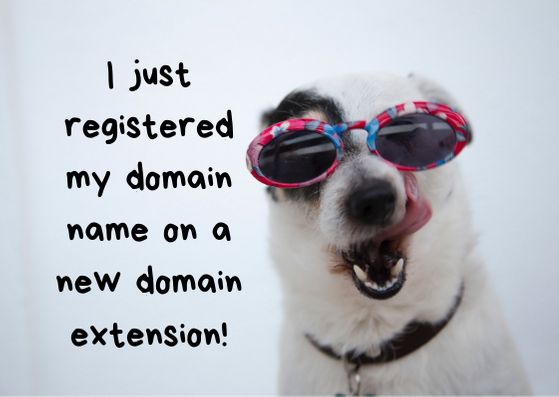 Domain registration tips from a cute dog